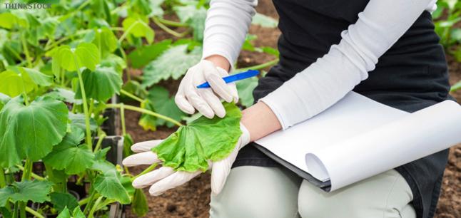 Image result for Agricultural & Horticultural