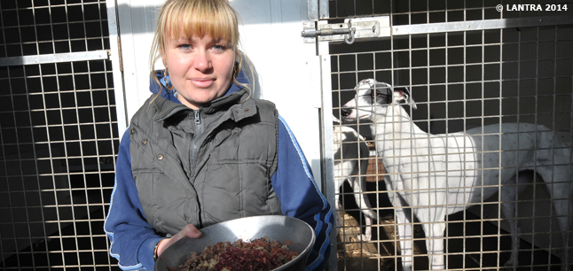 Planit Job Profiles Animal Care Assistant Work With Animals