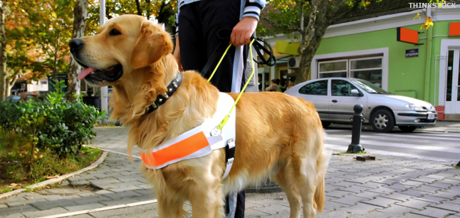 Planit : Job Profiles : Assistance Dog Trainer Work with Animals